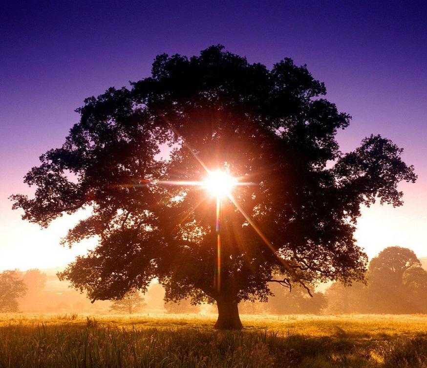 https://leewoof.files.wordpress.com/2013/02/tree_of_life.jpg
